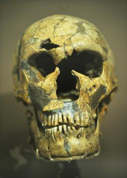 The skull scientists in the UK used to create a life-size reconstruction of a Neanderthal. Credit: AFP / Getty Images